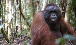 Rutgers Summer Primates Ecology and Conservation in Indonesia
