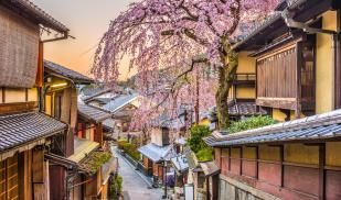 From a hilltop, a small street is line with traditional Japanese style architecture and a cherry blossom tree hangs over the houses, in full bloom